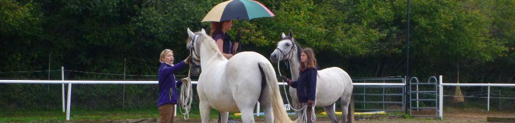 Fürs Pferd